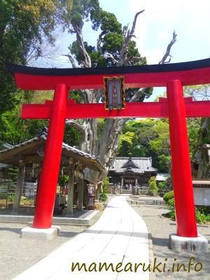 伊古奈比咩命神社(白濱神社)|下田市