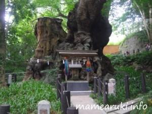 来宮神社3