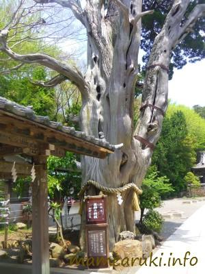伊古奈比咩命神社(白濱神社)3