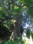 日枝神社4・イチイカシ