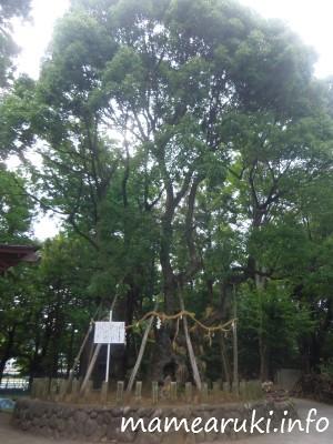 広瀬神社7