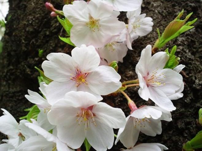4月|例祭日カレンダー